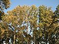 Amin al-Islami Park - Trees and Flowers - Nishapur 038.JPG