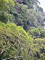 Among Greens (5732010536).jpg