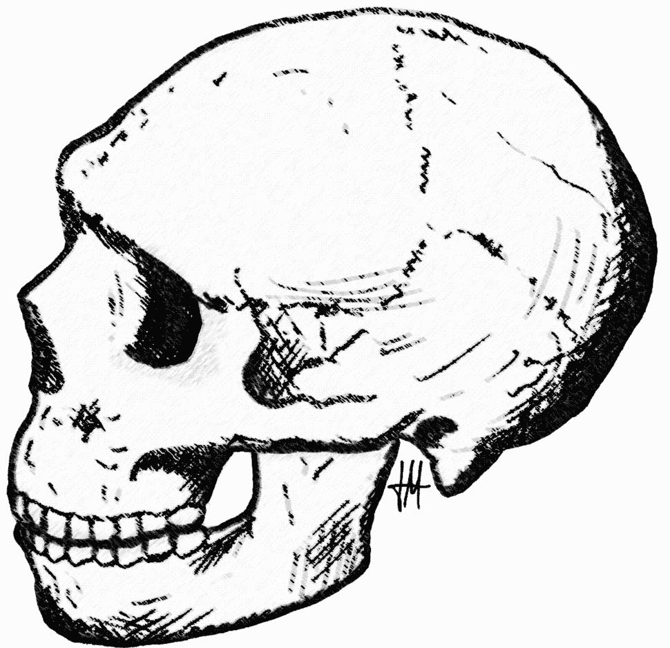 Amud skull