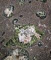 Amygdaloidal basalt (Portage Lake Volcanic Series, upper Mesoproterozoic, 1.093 to 1.097 Ga; Keweenaw Peninsula, Upper Peninsula of Michigan, USA) 15.jpg