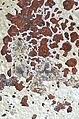 Ancient Wall Texture (4025447481).jpg