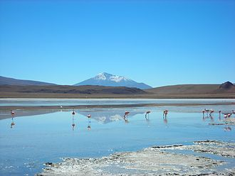 High Andean Flamingos Memorandum of Understanding - Flamingos foraging in an altiplano lake in Southwest Bolivia