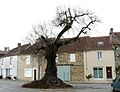 Angoisse arbre.JPG