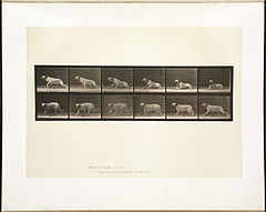 Animal locomotion. Plate 714 (Boston Public Library).jpg