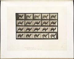 Animal locomotion. Plate 739 (Boston Public Library).jpg