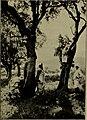 Annuaire du Conservatoire et du jardin botaniques de Genève (1902) (18237288909).jpg