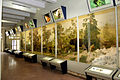 Another look at the Biodiversity 3D diorama at the Bio gallery of Pakistan Museum of Natural History.jpg