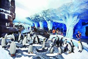 Antarctica: Empire of the Penguin - Penguin exhibit at the Empire of the Penguin ride's conclusion