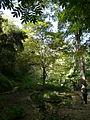 Antic jardí botànic P1250817.jpg
