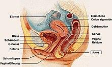 Menneskekroppen Wiki