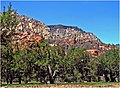 Apple Orchard, Oak Creek Canyon, AZ 7-13 (14590867356).jpg