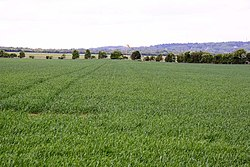 Arable field next to Dalton Barracks - geograph.org.uk - 1299003.jpg