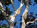 Arboreal Nests - Flickr - treegrow.jpg