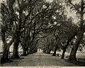 Arboriculture (19562956610).jpg