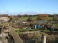 Archibald Road Allotments - geograph.org.uk - 1623011.jpg