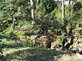 Arisugawa-no-miya Memorial Park - DSC06867.JPG