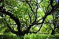 Artashat Apricot Garden3.jpg