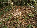 Arum maculatum 01 ies.jpg