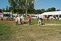 Attelage Divers mondial du cheval percheron 2011Cl J Weber10 (23456747103).jpg
