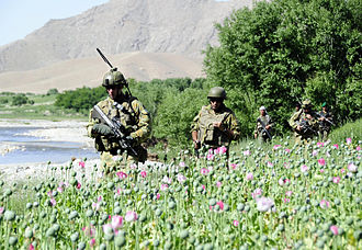 Mentoring Task Force One - MTF-1 and Afghan soldiers patrol through a poppy field in April 2010