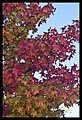 Autumn Leaves begin to fall-061 (5795807201).jpg