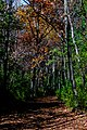 Autumn Trails RCR-TR-3.jpg