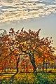 Autumn Trees (79966471).jpeg