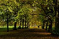 Autumn View in the Avenue of Tyne Green - panoramio.jpg