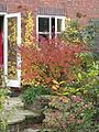 Autumn back garden - Flickr - peganum.jpg