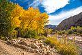 Autumn colours in SW Utah - lower Cedar Canyon road (15654712242).jpg