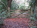 Autumn leaves around the gate leading to the road - geograph.org.uk - 1074752.jpg