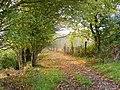 Autumnal footpath - geograph.org.uk - 1027200.jpg