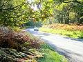 B4234, New Road, near Parkend - geograph.org.uk - 1532952.jpg
