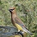 Backyard Bird (49814695072).jpg