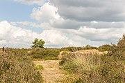 Balloërveld, natuurgebied in Drenthe 05.jpg