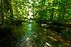 Barney Creek.jpg