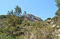 Barranc de la Viuda, microreserva de flora, Moraira.JPG