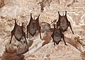 Bats at the Sun Temple, Modhera.jpg
