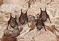 Bats at the Sun Temple, Modhera.jpg