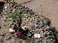 Baynun 200612 Yemen-316 (354287134).jpg