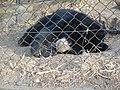 Bear DSCN2567.jpg