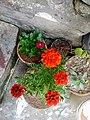 Beautiful flowers.png.jpg