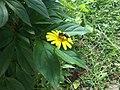 Bee foraging nectar in a flower.jpg