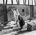 Bejaarde vrouw bij aan een ladder opgespannen geslacht varken, Bestanddeelnr 254-3469.jpg