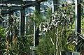 Bern Botanischer Garten Sukkulentenhaus.jpg