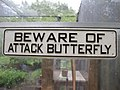 Beware of attack butterfly? (3518538476).jpg