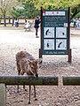 Beware of the Deer - Nara (42161854941).jpg