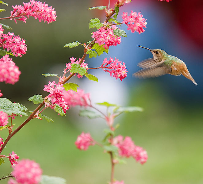 File:Bird and Flowers.jpg