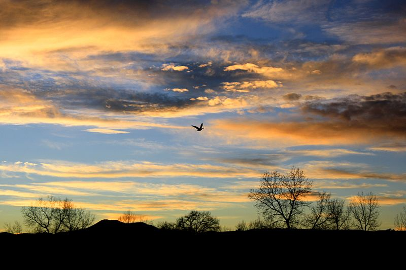 File:Bird flying at sunset.jpg