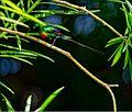 Birds MG 8622 (6395671919).jpg